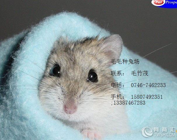 该科各种类动物基本都属中小型鼠类