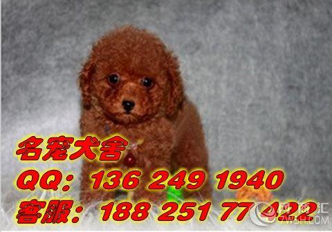 广州哪里有卖宠物狗广州哪个地方的宠物狗最好